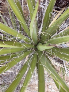 cactus-closeup1