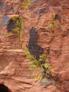 red-rock-lichen