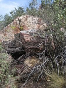 rock-bush