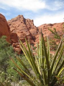 rocks-cactus