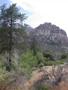 tree-mountain