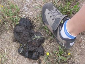 bear-dung