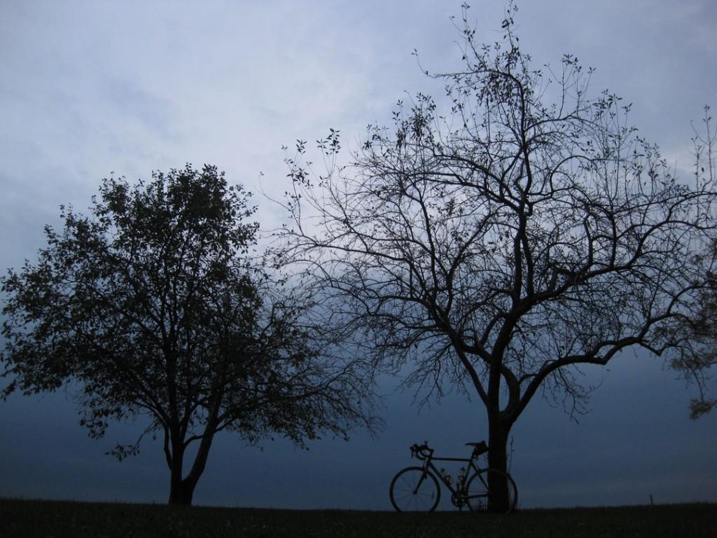 102209-gray-trees