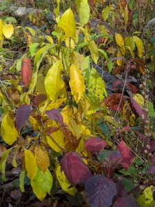 colored-leaves