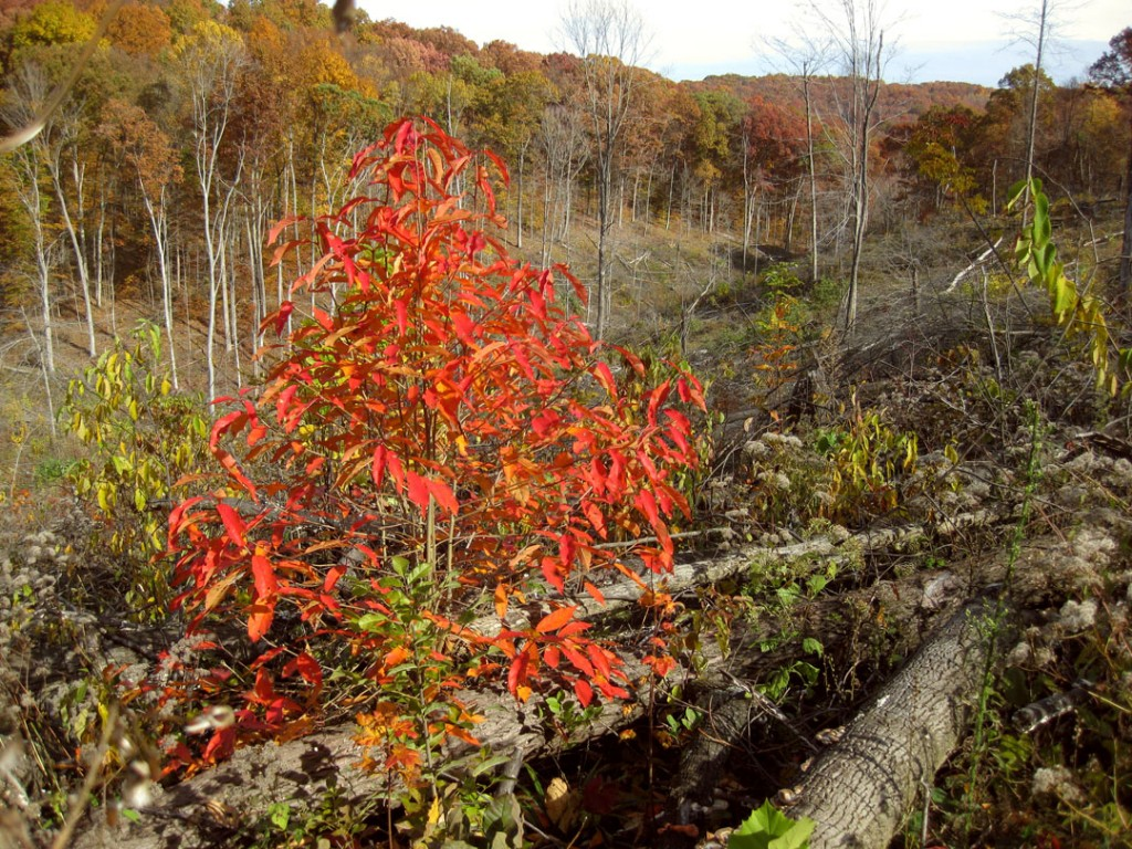 red-bush-logs