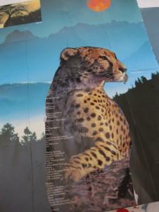 cheetah resourse