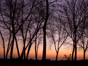 12.23.11 early sunrise