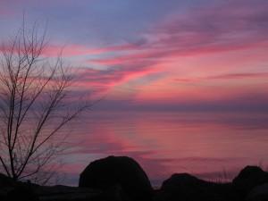 2.23.12 rose sunrise 1