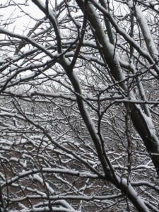 2.24.12 snow branches