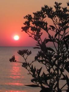 8.31.12 sunrise 4