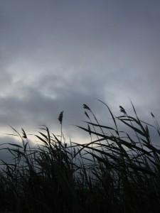 6.25.14 gray morning 8