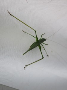 insect visitor 1