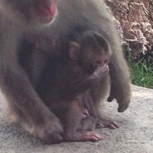 baby macaque 3