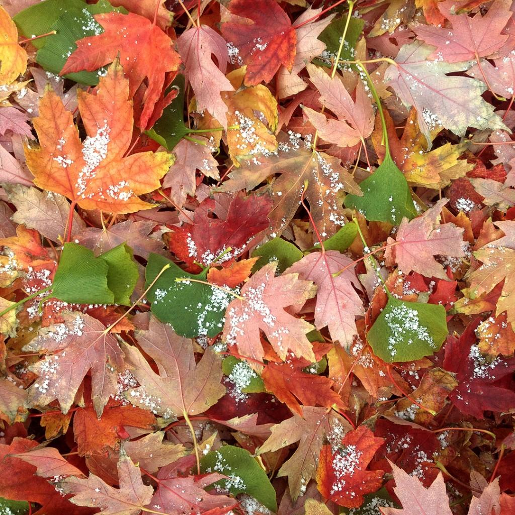 autumn leaves insta